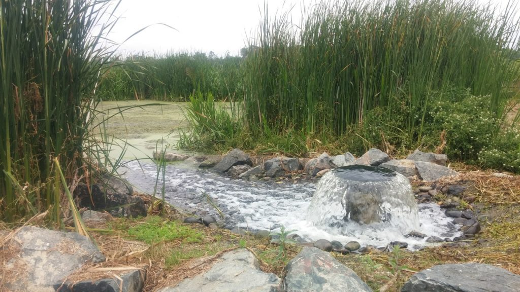 Arrivée des eaux en zone libellule