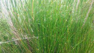 Exemple de plantes